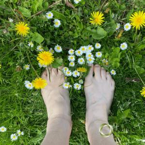fødder_mælkebøtte